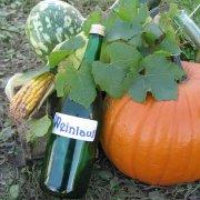 7. Elbtal-Weinlauf am 9. Oktober 2010