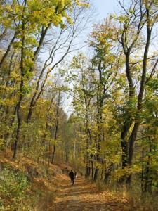 Herbstlicher Mischwald auf dem Weg nach Drakendorf (Foto: M. Splittgerber)